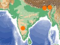 インドの代表的産地